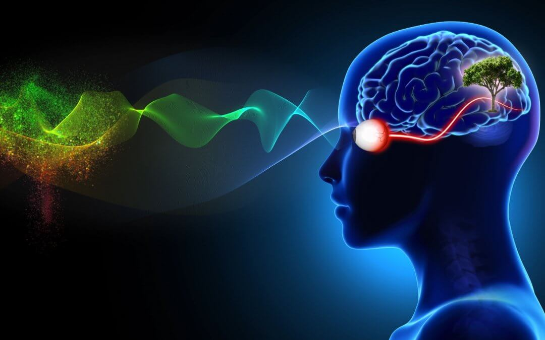 The Colours of Light – Green Is Best for Brain, Eyes & Health